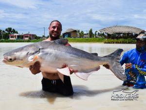 mekong cat fish
