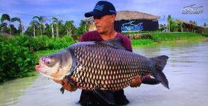 Siamese Carp Hookers Fishing Lake Pattaya