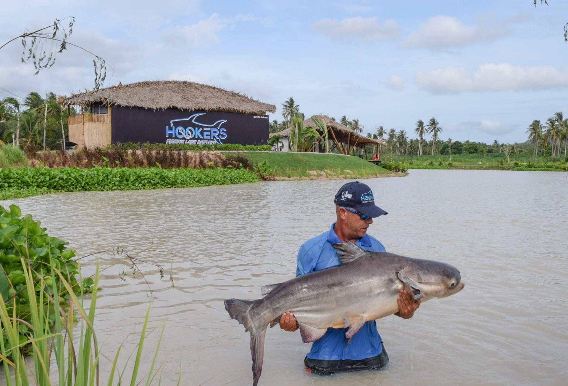 chaopraya cat fish at hookers fishing lake pattaya