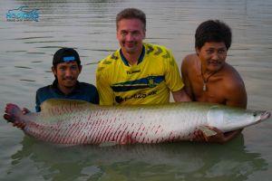 arapaima fish