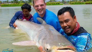 CAPTURE OF SOME OF OUR MEKONG GIANT CATFISH (PANGASIANODON GIGAS)