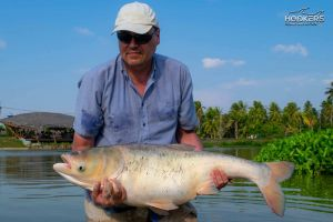 Typical chinese bighead carp stocked from stock pond