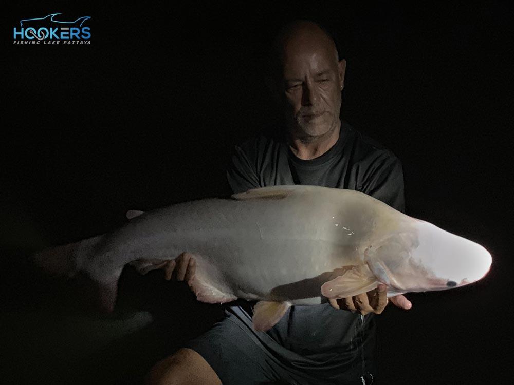 Albino-Iridescent-Shark